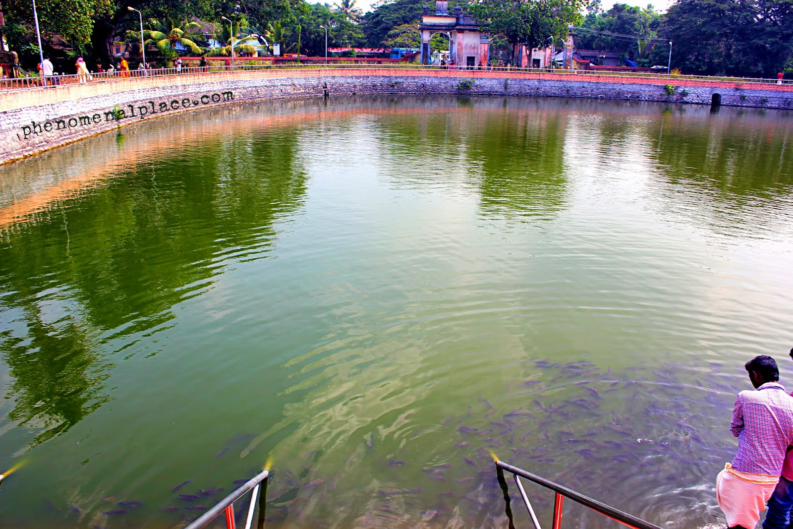 Ambalappuzha image for Koi pond india