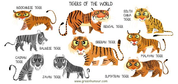 Different Big Cat Species Together In Enclosure