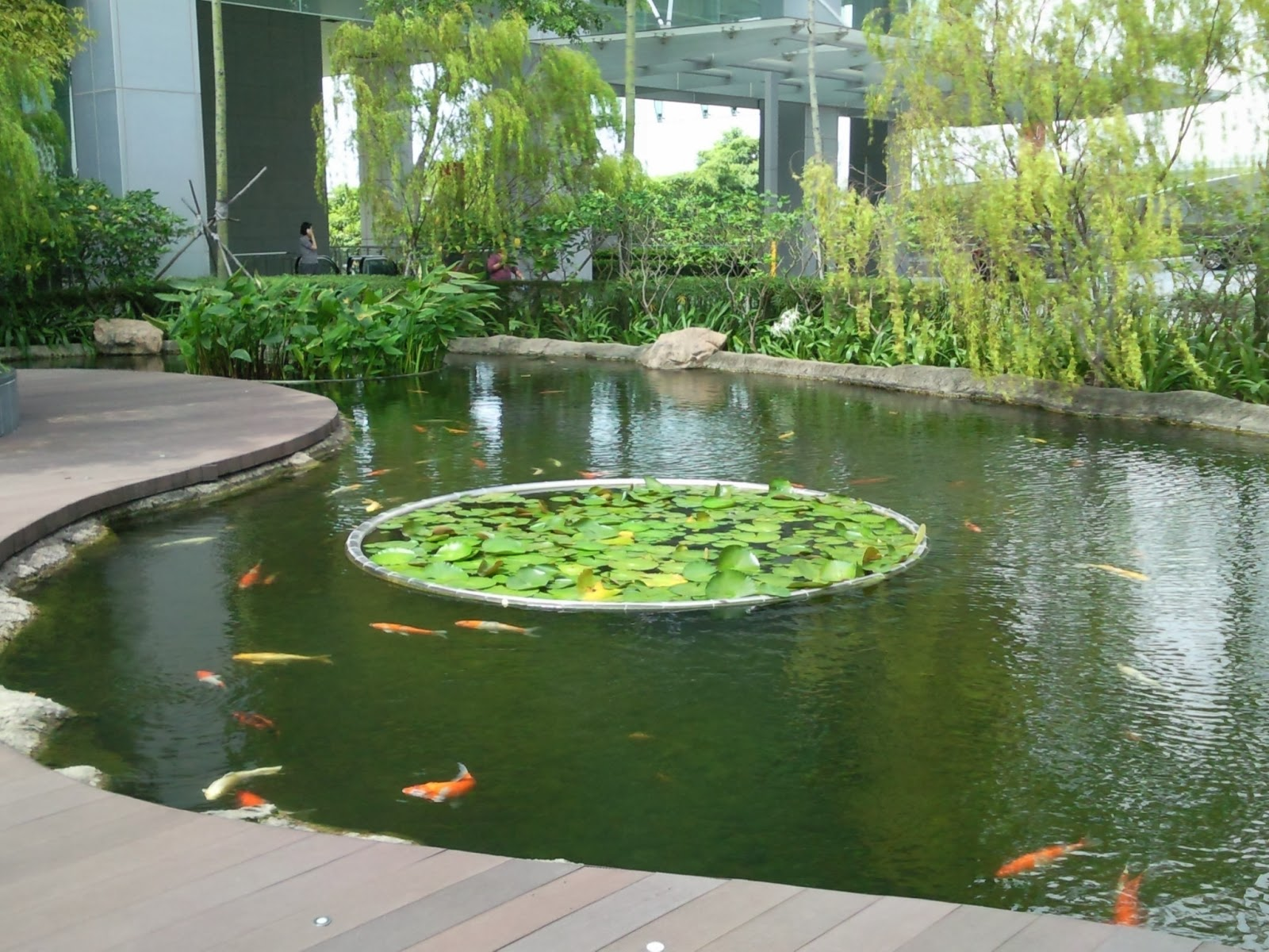 Tropical fisher man fish tanks and aquarium crs koi pond for Koi pond quezon city
