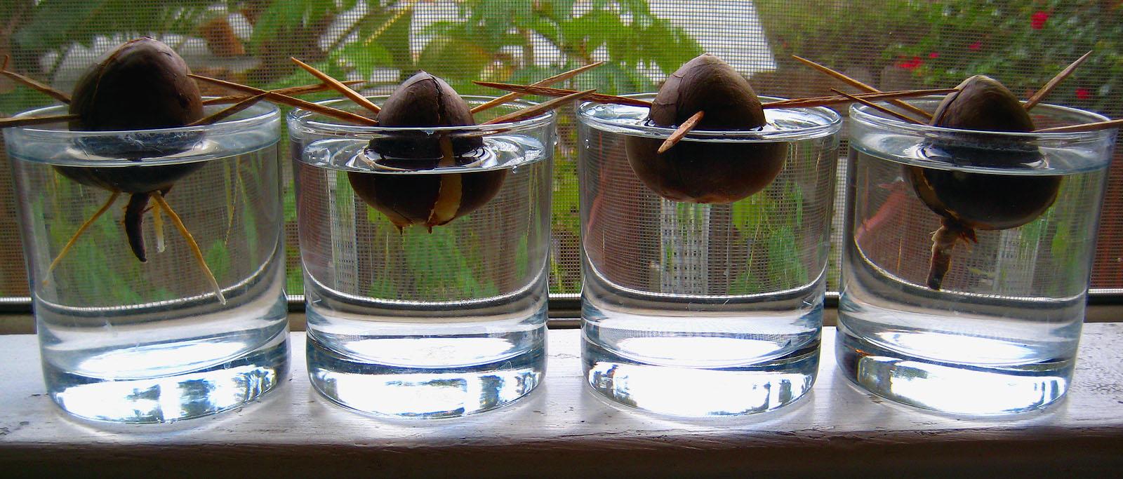 Hibiscus Flowershop Blog: Grow houseplants from kitchen scraps