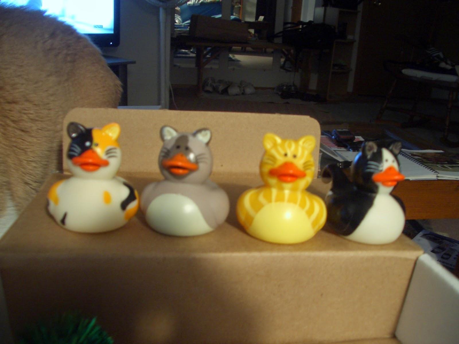 Bath Cat Duckies Gif