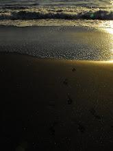Playa de Chimisay. Güímar