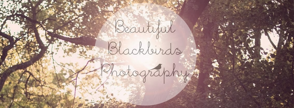 Beautiful Blackbirds Photography