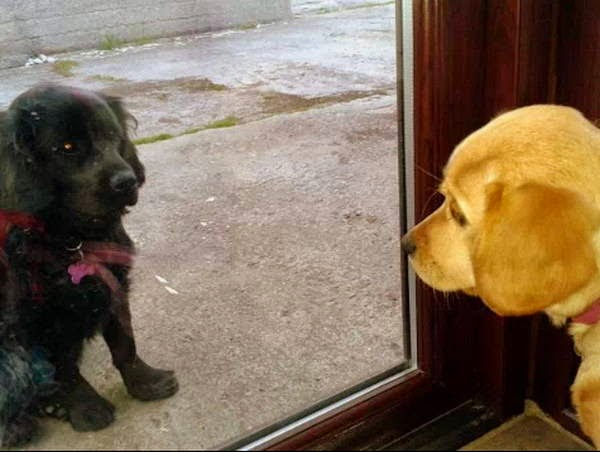 Cute dogs - part 44 (50 pics), funny dog picture, dog photos