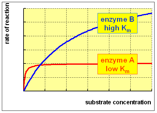 the determination of enzymes substrate affinities and their maximal reaction rates The relationship between enzyme and substrate concentrations and rates to see their reaction rates a reaction, the enzyme binds to the substrate.
