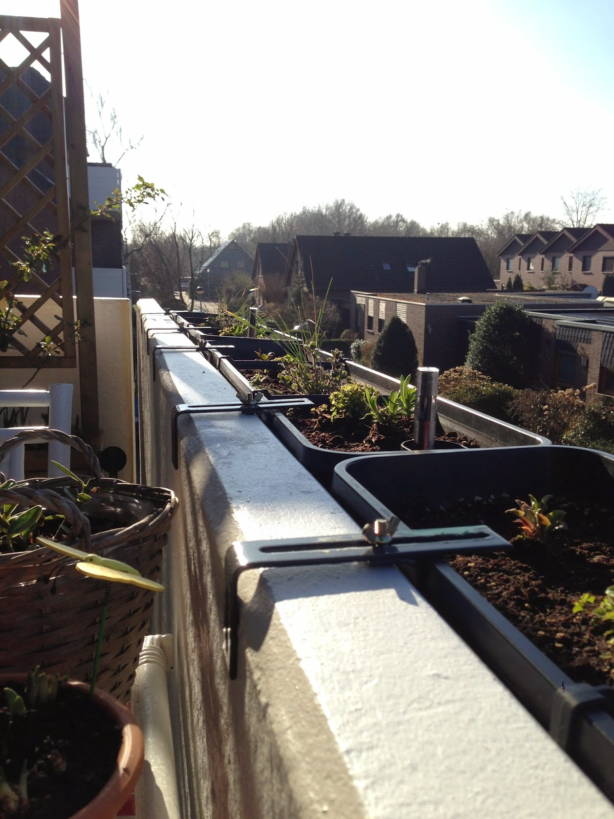 tessimo 39 s balkongeschichten balkonk sten winterhart. Black Bedroom Furniture Sets. Home Design Ideas