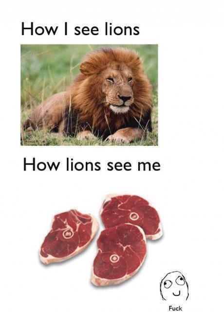 How I See Lions