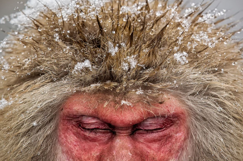 26. Snow Monkey