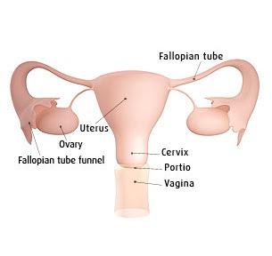 kehamilan minggu 1