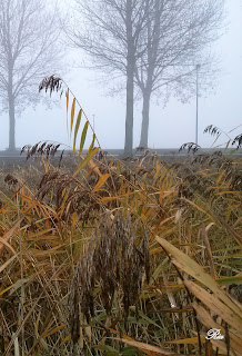 Mist in Kardinge