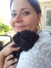 New Puppy Aug 2012
