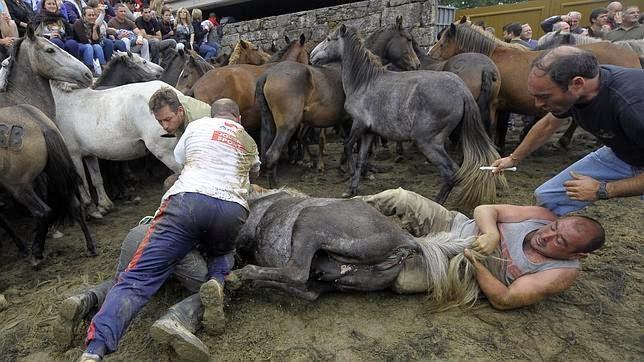 """Image result for 6. """"Rapa das Bestas"""" in Galicia"""
