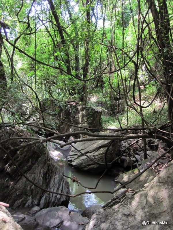 Lianas, rocas, vegetación y agua en Arroyo Hondo - Cerro Viejo