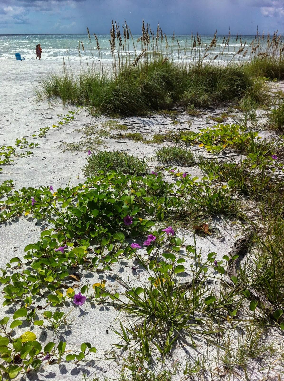 Sanibel Island Florida - a wonderful vacation - Saving Room for Dessert