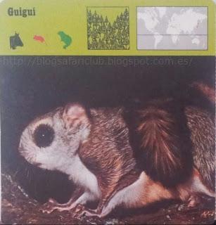 Blog Safari club, El Guiguí, es un pequeño fantasma nocturno