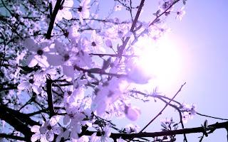 Fotoğrafları ilkbahar manzara resimi ilkbahar manzara resimleri