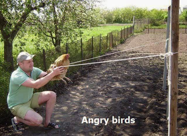 status facebook gambar lucu angry birds