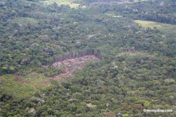 nuestros bosques...