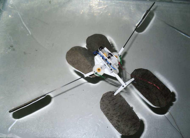 Water Strider Facts Robot Mimics Water Striders'