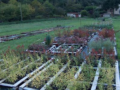 Fleurs plantes etc la p pini re horticole m jardin for Bouillie bordelaise piscine