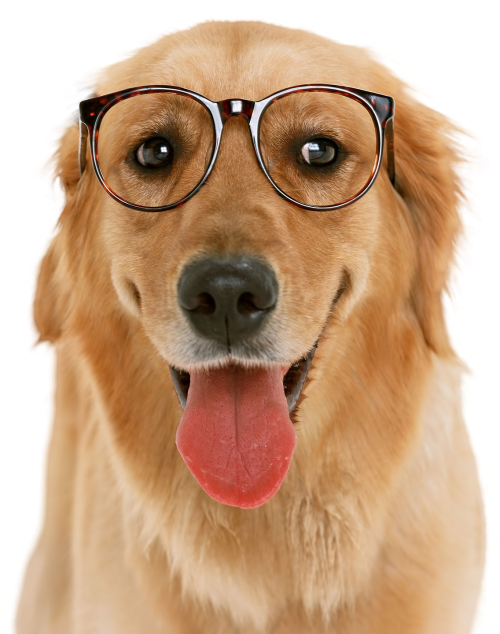 Cuidado Que Deben Tener Los Cachorros El Mejor Amigo Del