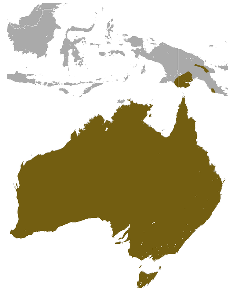 Short-beaked echidna (Tachyglossus aculeatus) distribution