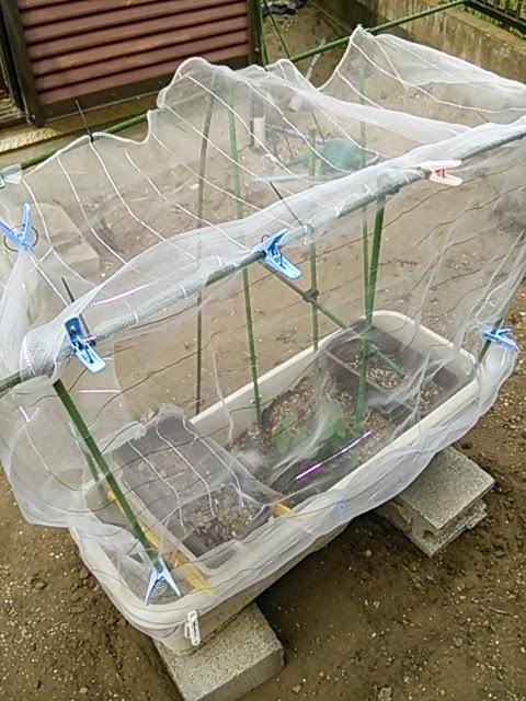 枝豆 栽培 防虫ネット 支柱 張り方 家庭菜園 プランター