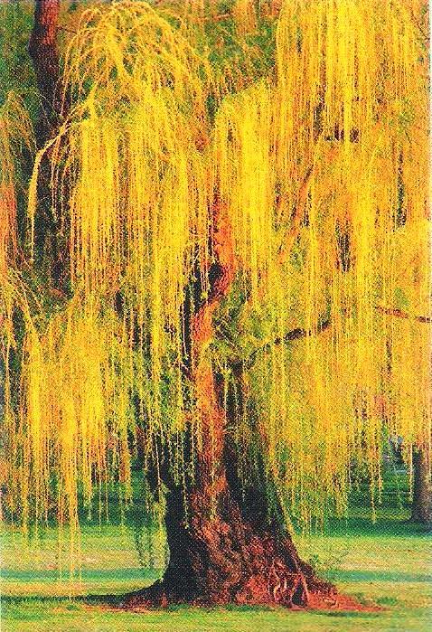 Árvores Exóticas (Estrangeiras) - Mudas Frutabella