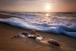 8579900 waves approaching sea shells lying on sand during sunset تعرف على سبب سماع صوت المحيط في القواقع