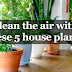 5 Houseplants That Purify Your Air In Your Home