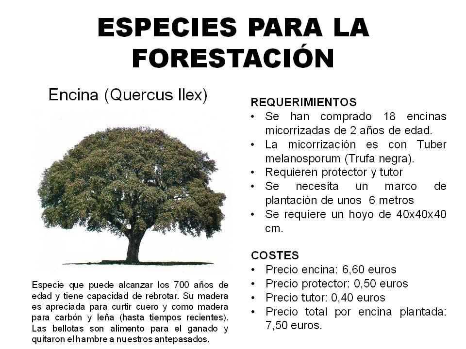 El monte de los rboles con nombre pasos previos al proyecto for Tipos de plantas forestales