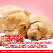 Imagenes Con Frases de Amistad para tus Amigos fotos con mensajes de amistad para san valent adn