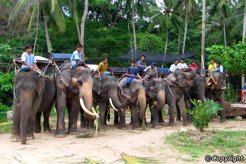 رحلة على ظهر الفيل وسط غابات كوساموي