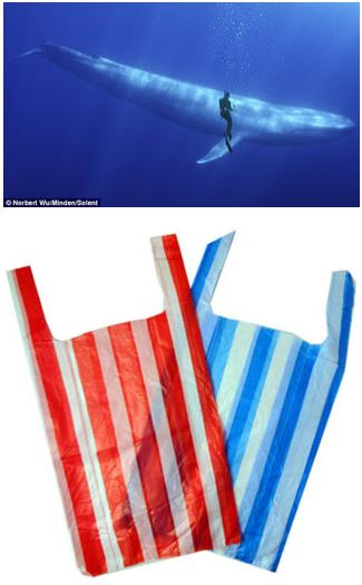 SAVE THE WHALES. BAN PLASTIC BAGS