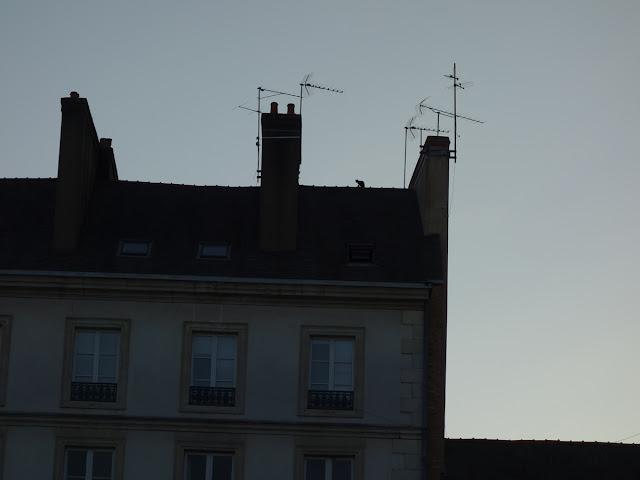Tiens, un chat sur le toit ! - Place Saint-Germain, Rennes, mardi 1er septembre...