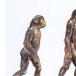 A Evolução de Algumas Espécies