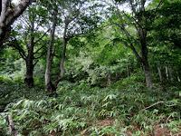 キノコの森