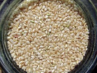 arroz integral foto