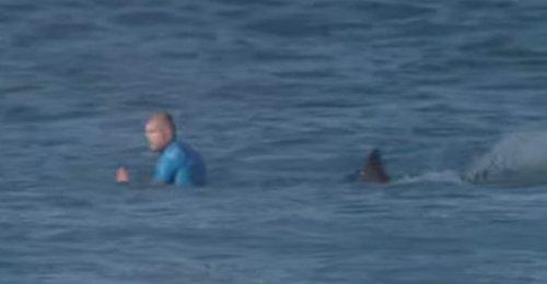 راكب أمواج استرالي ينجو من سمكة قرش بأعجوبة shark(1).jpg