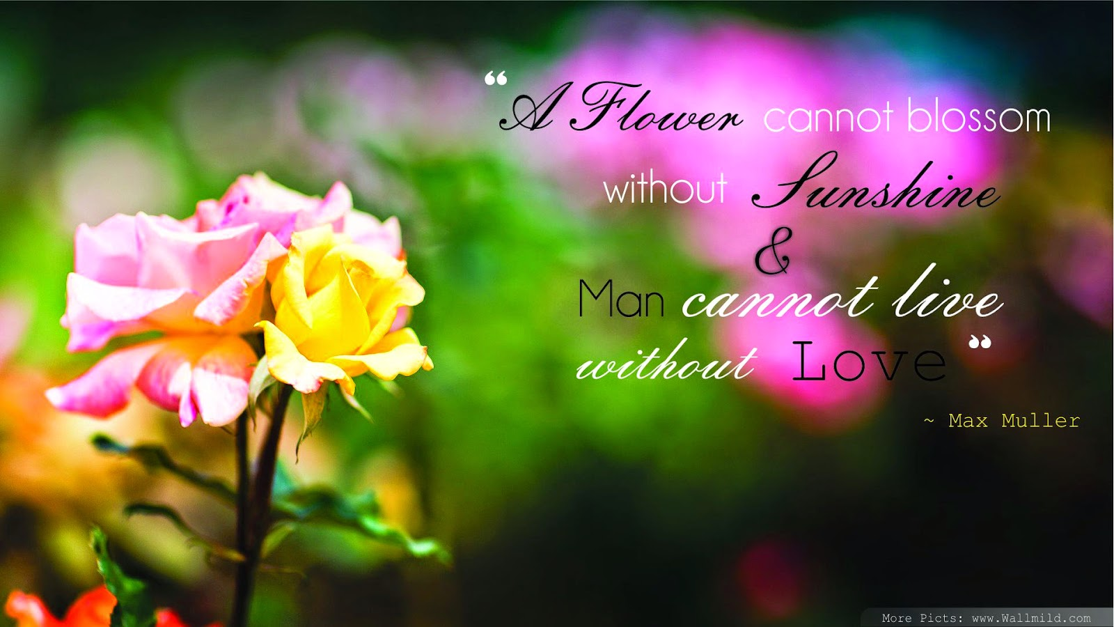 Flowers Quotes Wallpaper.. A Flowers