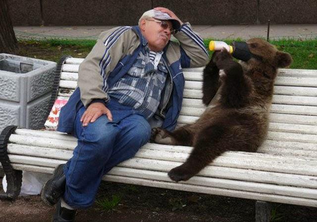 Медведи на улицах наших городов. Фото