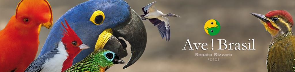 ave ! brasil