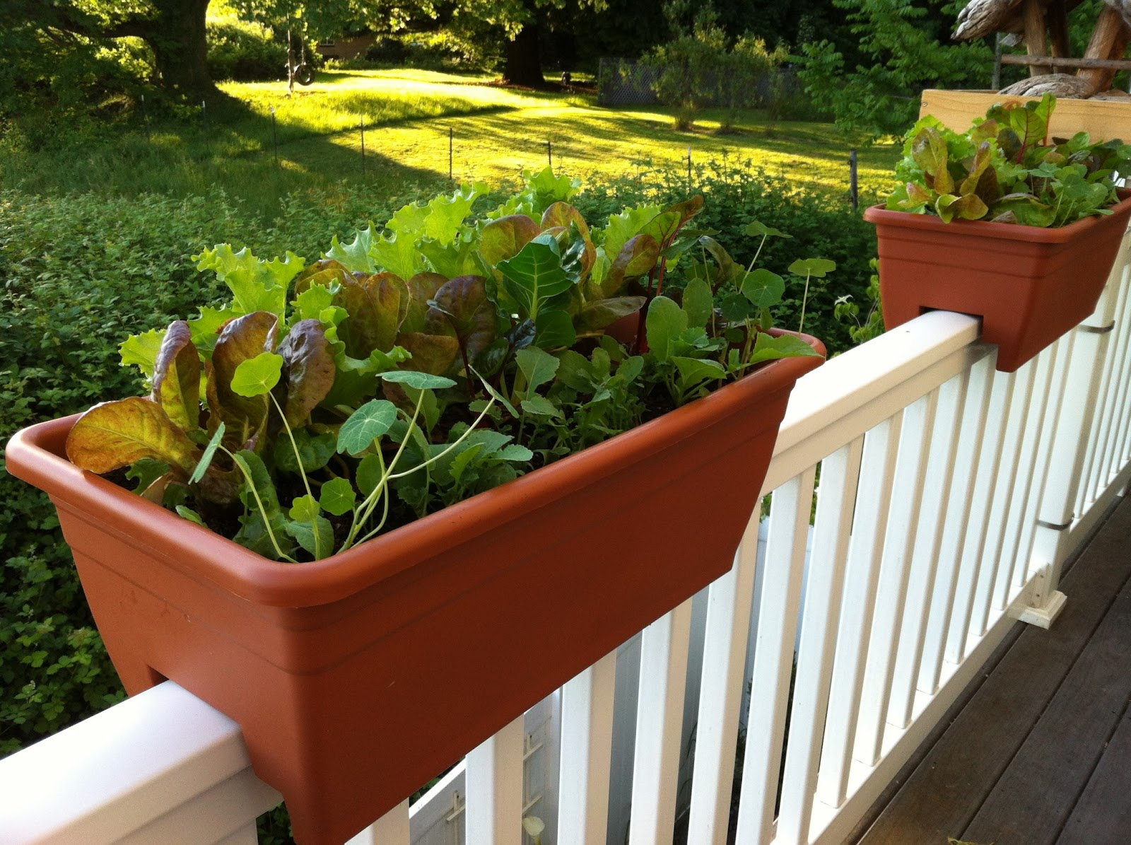 Banister planters 28 images deck rail planter boxes for Garden decking banister