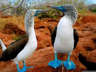 Pájaros en el amor