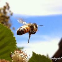 http://vidaecorganica.blogspot.com/2013/09/las-abejas-son-esenciales-para-nuestra.html