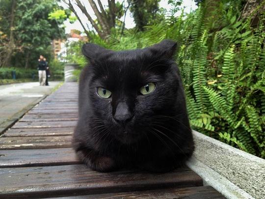 Cat from Taipei Taiwan