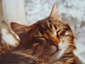 My Cat Mestan
