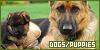 http://fanlisting.altervista.org/dogs