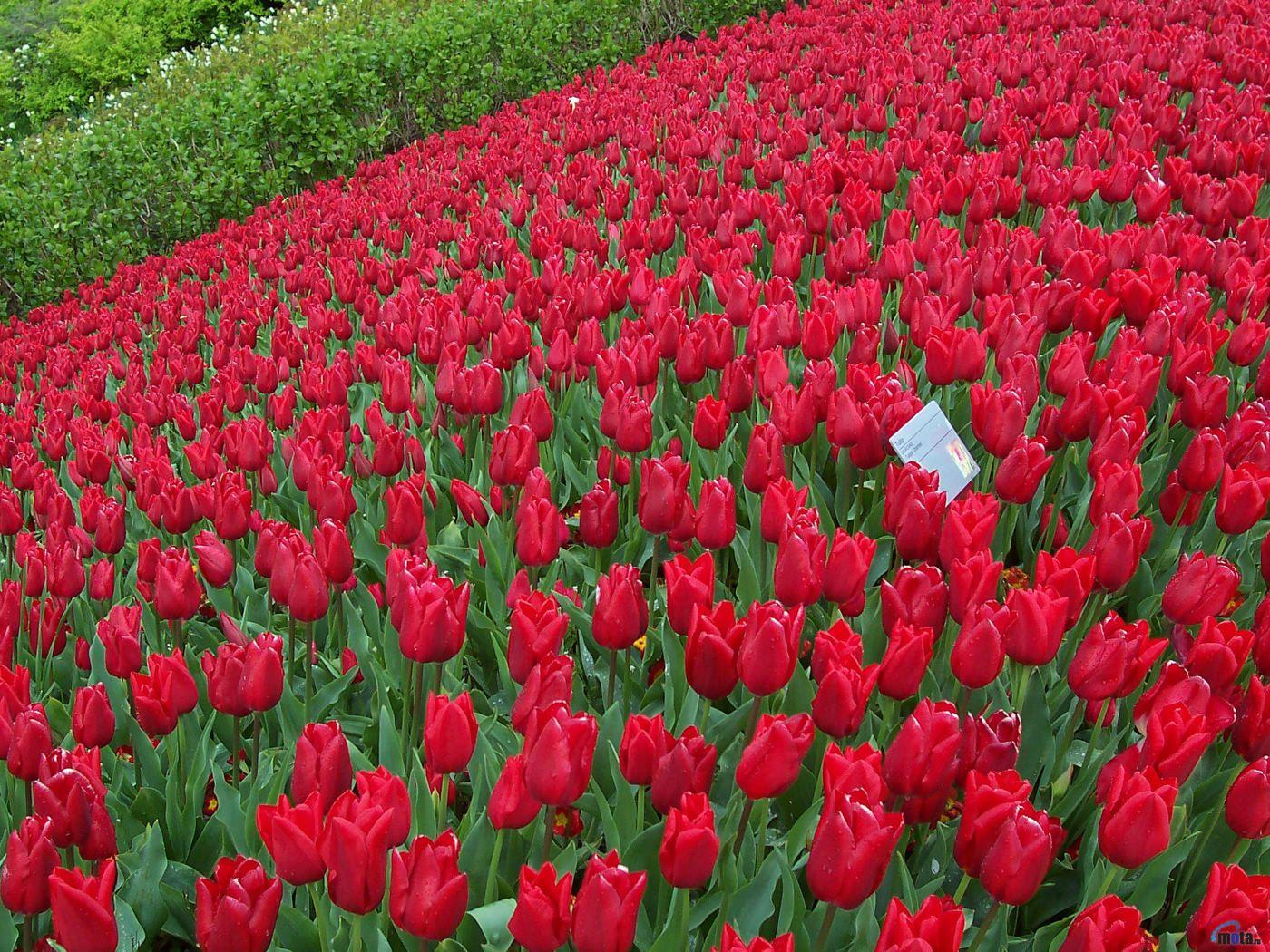 Foto Foto Kebun Bunga Yang Indah Gambartopcom
