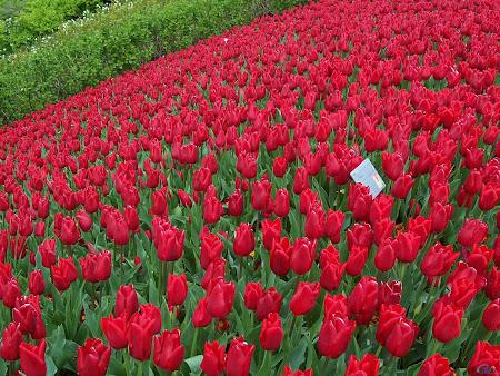 foto taman dengan bunga